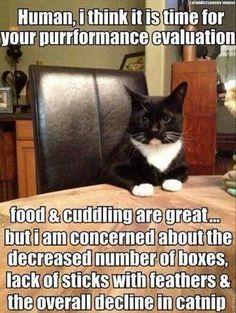 Cats.....