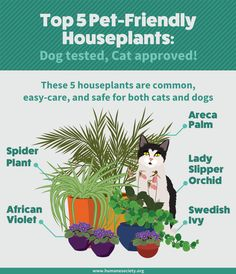 Grow Houseplants without Harming Your Pets Not all houseplants are safe for your pets. Check out this guide to pet-friendly houseplants.Not all houseplants are safe for your pets. Check out this guide to pet-friendly houseplants. Houseplants Safe For Cats, Cat Safe Plants, Cat Plants, Pasto Natural, Cat Friendly Plants, Dog Friendly Garden, Deco Nature, Cat Garden, Garden Planters