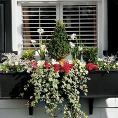 Window Box Cold hardy window box with flowering bulbs. Window Box Cold hardy window box with flowering bulbs.Cold hardy window box with flowering bulbs.Window Box Cold hardy window box with flowering bulbs.Cold hardy window box with flowering bulbs. Window Box Flowers, Bulb Flowers, Flower Boxes, Flower Ideas, Flower Basket, Winter Window Boxes, Christmas Window Boxes, Dusty Miller, Container Plants