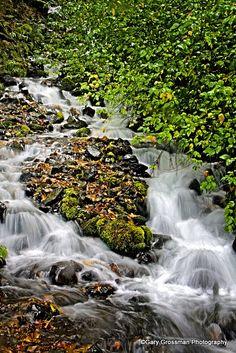 Wahkeena Creek - Western Oregon