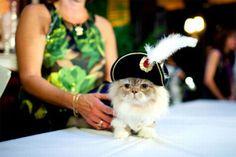 Napoleon kitty