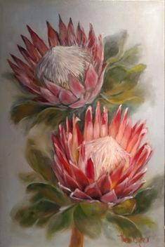Protea, Western Cape, South Africa 'Unfurled' Oil on canvas x Protea Laurifolia The second of a set of three Cape - Salvabrani Cactus Paintings, Flower Painting, Art Painting, Flower Art Painting, Photography Prints Art, Painting, Protea Art, Whimsical Art, Beautiful Art