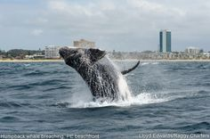 Photos of Whales, Dolphins, Sea Birds around Port Elizabeth, South Africa.