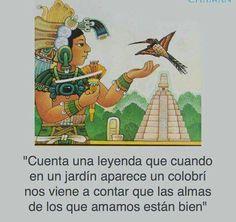 EL COLIBRÍ  Procedencia  Sólo vive en América  SIGNIFICADO  La energía vital, la pasión y el renacimiento. Es el mensajero y guardián del tiempo entre los indígenas americanos  colibrí en una flor, alimentándose de su néctar  HISTORIA DEL COLIBIBRI  More: https://m.facebook.com/photo.php?fbid=1148580515183738&set=gm.584512521729545&type=3&theater&utm_content=bufferdb2f0&utm_medium=social&utm_source=facebook.com&utm_campaign=buffer