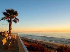 ocean/palm trees