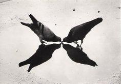 symmetries of birds