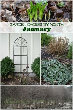 Garden chores for the month of January including the fruit, vegetable garden and flower garden, basic lawn and yard care, and seed starting.