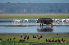 The iSimangaliso Wetland Park was listed as South Africa's first World Heritage Site in December 1999 in recognition of its superlative natural beauty. South Afrika, Durban South Africa, Amazing Animals, Wetland Park, Bay Lake, Kwazulu Natal, Out Of Africa, Mundo Animal, African Safari