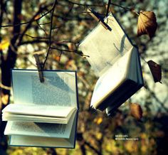 Love / The idea of hanging books in trees.