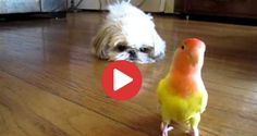 Videos Archives - Shih Tzu Buzz Small Puppy Breeds, Small Puppies, Things That Bounce, Things To Come, Dog Cages, Pet Dogs, Pets, Shih Tzu Puppy, Cavalier King Charles