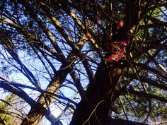February 21, 2014 Find the Tree Elf!