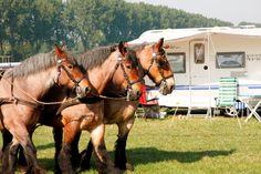 Op d'n Akker in Nagele, Flevoland Poldernostalgie bij deze unieke kampeerlocatie tijdens Uit-jeTent. Tijdens Uit-jeTent kun voordelig kamperen en zijn er heel veel activiteiten.