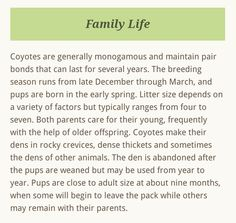 Coyote Facts, Coyote S, Large Animals, Early Spring, Family Life, How To Plan, Beginning Of Spring, Start Of Spring