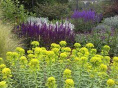 Potted Plants, Garden Plants, Stipa, Love Garden, Outside Living, My Secret Garden, Salvia, Mediterranean Style, Garden Inspiration