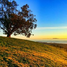 Tip Top of Two Trees Ventura. California. Photo by Hector Vargas Jr http://instagram.com/Hectro805
