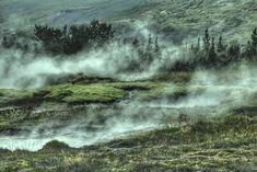 nature landscape woods forest smoke fog trees leaves green travel adventure