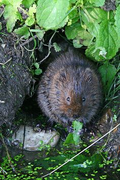 Beavers, Bap, Mammals, Action, Content, Sweet, Water, Image, Candy