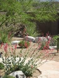 Image result for hot desert landscaping