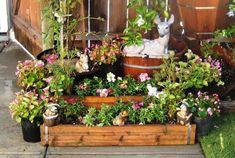 Window Box Contest Entry Pretty Patio Perennials