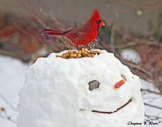 "Original description: ""Create a snowman bird feeder."" My description: Dribble some red food dye around the bird seed and give the snowman a grisly expression, and you've got yourself a winter scene to warm any Zombie fan's heart! Noel Christmas, Winter Christmas, Christmas Crafts, Winter Fun, Winter Time, Winter Snow, Snowman Images, For Elise, Snow Sculptures"