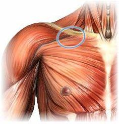 How to find and massage Perfect Spot #9, a common trigger point in the pectoralis major muscle of the chest.