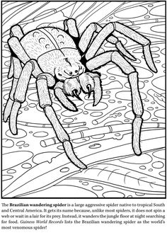 Deadly Insects and Arachnids Coloring Book Dover Publications