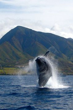 Things to Do on a Winter Vacation in Maui - Ordinary Traveler