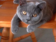 Gorgeous blue. Look at those eyes!