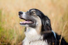 Border Collie Cross - At Beaver Lake. Gord Rufh Victoria Dog Photographer