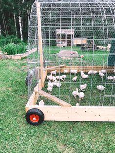 Chicken Coop Run, Chicken Pen, Chicken Cages, Chicken Garden, Chicken Coop Designs, Chicken Tractors, Backyard Chicken Coops, Backyard Chicken Coop Plans, Backyard Farming