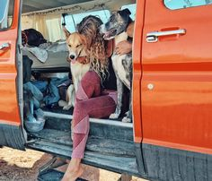Orange Van, Happy Dogs, Not Just a Life But an Adventure // via briannamadia