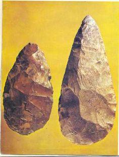 Pěstní klín Elementary Science, Prehistoric, Genetics, Evolution, Animals, Historia, Animales, Animaux, Prehistory