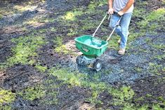 man pushing green broadcast spreader distributing blue grass seed on lawn Lawn Care Schedule, Lawn Care Tips, Lawn And Garden, Garden Edging, Garden Trees, Herb Garden, Reseeding Lawn, Planting Grass Seed, Lawn Soil