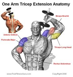 tricep extension anatomy