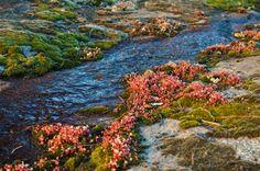 4. Panola Mountain State Park, Stockbridge