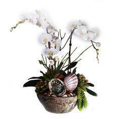 2326 Orchid, Shells & Succ. in Titanic Bowl 21x28