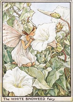Cicely Mary Barker's The Flower Fairies illustrations from a new   exhibition at Mottisfont Abbey.
