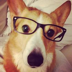 contributing my own hipster pet image