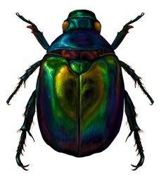 scarab beetle | Scarab beetle by wretchedharmony-lina