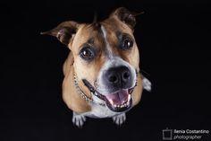 Maggie <3 » Fbsocialpet.com: il social forum per cani, gatti, cavalli, tutti gli animali