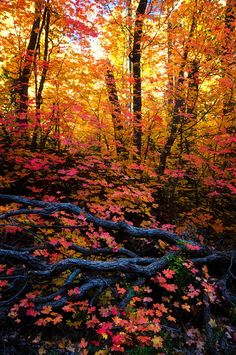 A Fall Forest (Arizona) by Saija Lehtonen on 500px