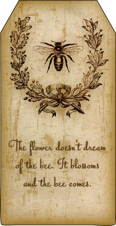 Bountiful Heirlooms: Free Printables: Bee and Beekeeping Tags aged paper / vintage style Éphémères Vintage, Vintage Style, Bee Art, Save The Bees, Bee Happy, Bees Knees, Queen Bees, Bee Keeping, Pyrography