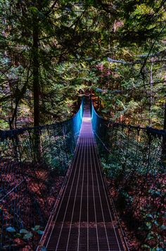 """Glow"" Suspension Bridge on the Juan de Fuca Trail, Vancouver Island, British Columbia, Canada 🍁 Places To Travel, Places To See, Vancouver Seattle, Vancouver Travel, Places Around The World, Around The Worlds, West Coast Trail, Canada Travel, Columbia Travel"
