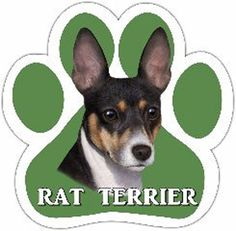 rat terrier things | dog_breed_paw_car_magnets_rat_terrier_13125-92.jpg
