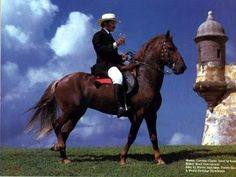 Puerto Rico Paso Fino Horse - I have a similar riding outfit