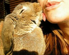 Sweet Rabbit Kisses (this looks like my bunny, Heidi, she kisses me all the time.)