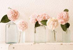 flowers light pink airy