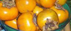 Sharonfruit. Gezond exotisch | Lekker Tafelen