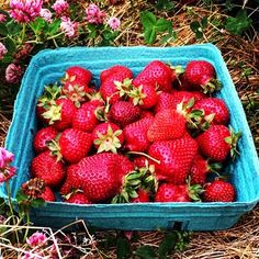 through farmland today providing me with strawberry SNAP: livedreamwander British Columbia, Strawberries, Vancouver, Wander, Road Trip, Traveling, Live, Instagram Posts, Travel
