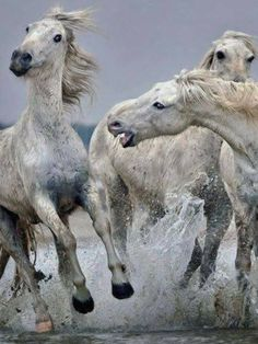 #HORSE##FUNNY##CUT##ANIMALS#